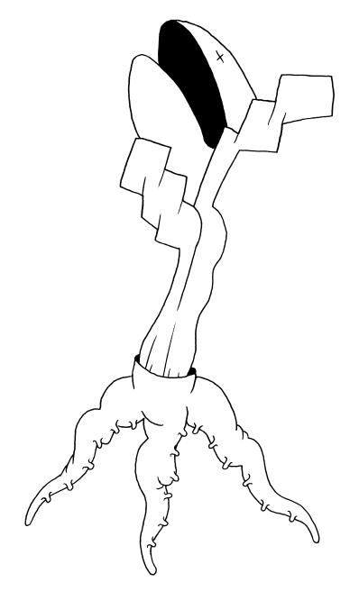 eclosu
